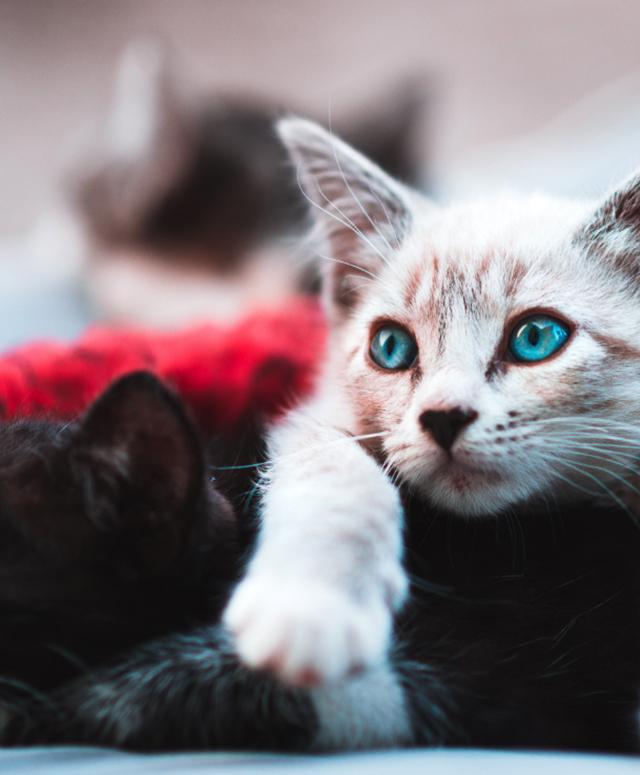 Catstab